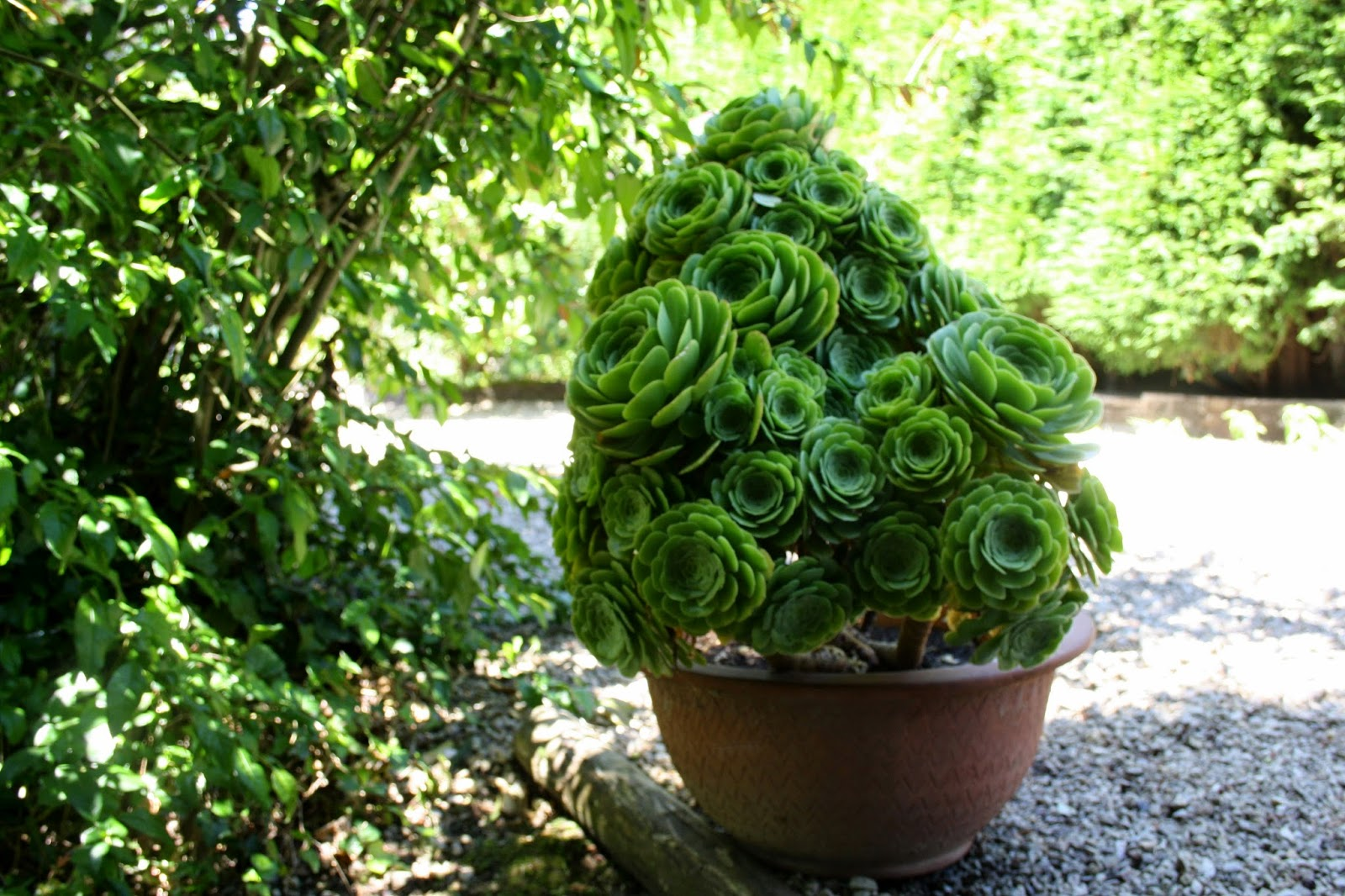El jard n de margarita una crasa escultural o la colcha for Bonsai de jardin