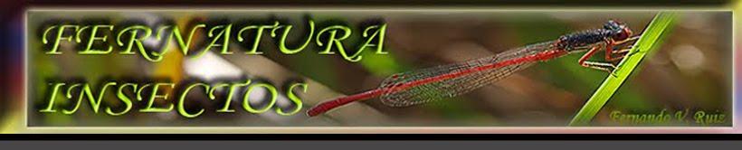 Insectos de La Rioja