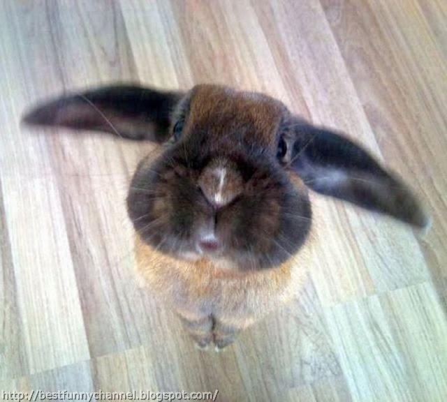 Funny rabbit.
