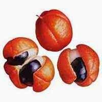 Rico fruto do guaraná