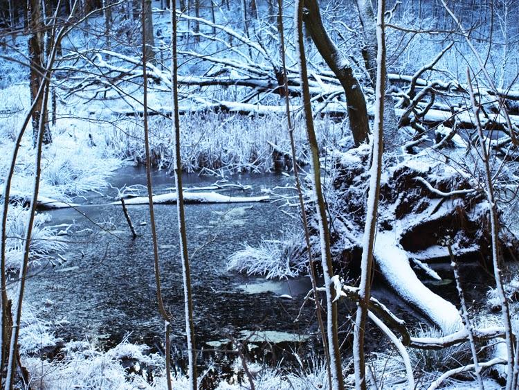 Rude skov med sne og mystik