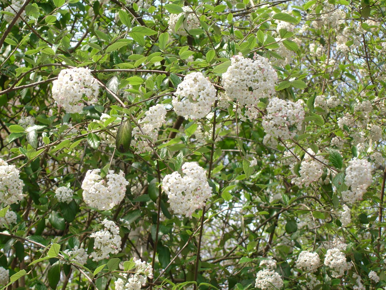 The Next Stage Women And Retirement The Flowering Trees And Shrubs
