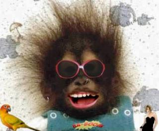Curiosos e Engraçados: Imagens Engraçadas de Animais