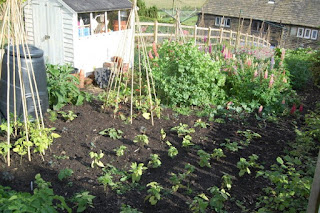 A new veg plot needs shelter but how do you shelter a new veg plot?