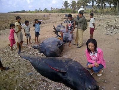 Ikan paus terdampar di Pulau Savu