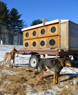 Best Dog Kennels Etobicoke