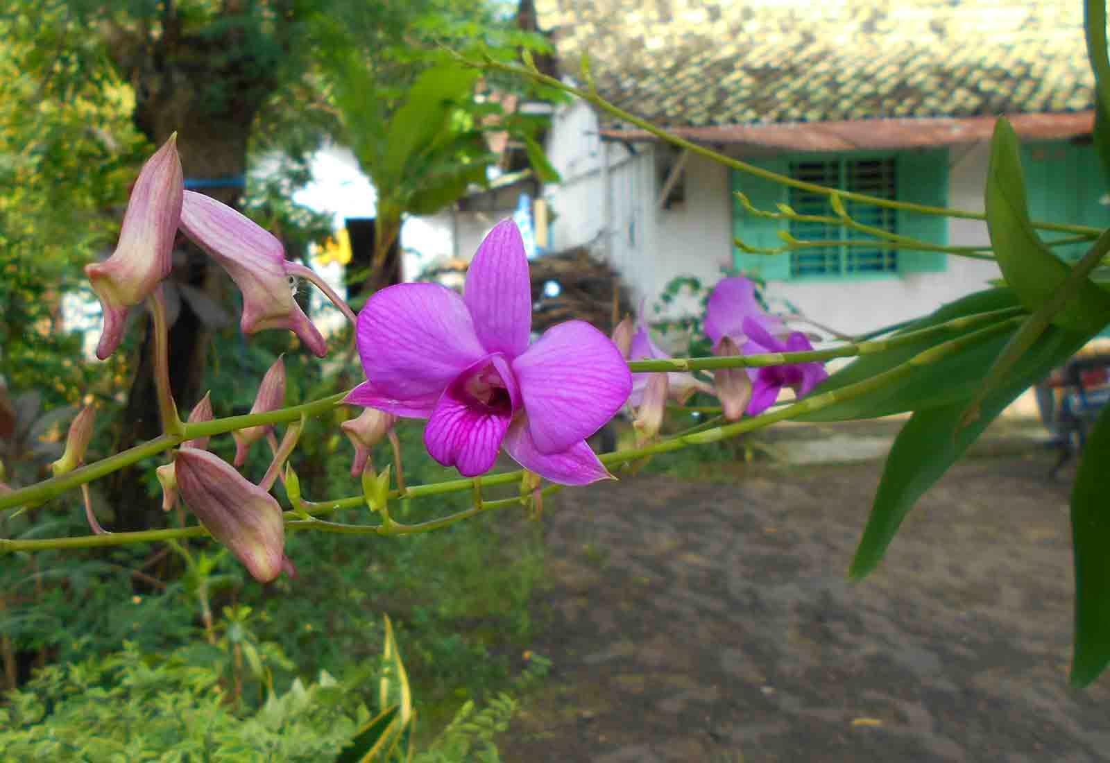 foto bunga anggrek yang indah