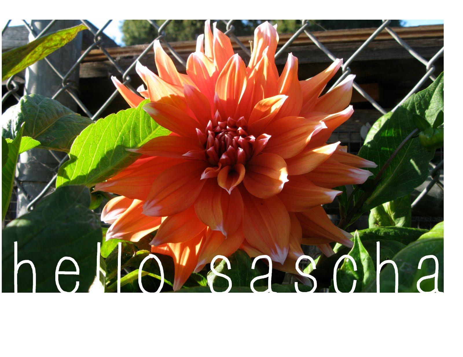 hello sascha