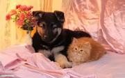 Kitten and pupies HD