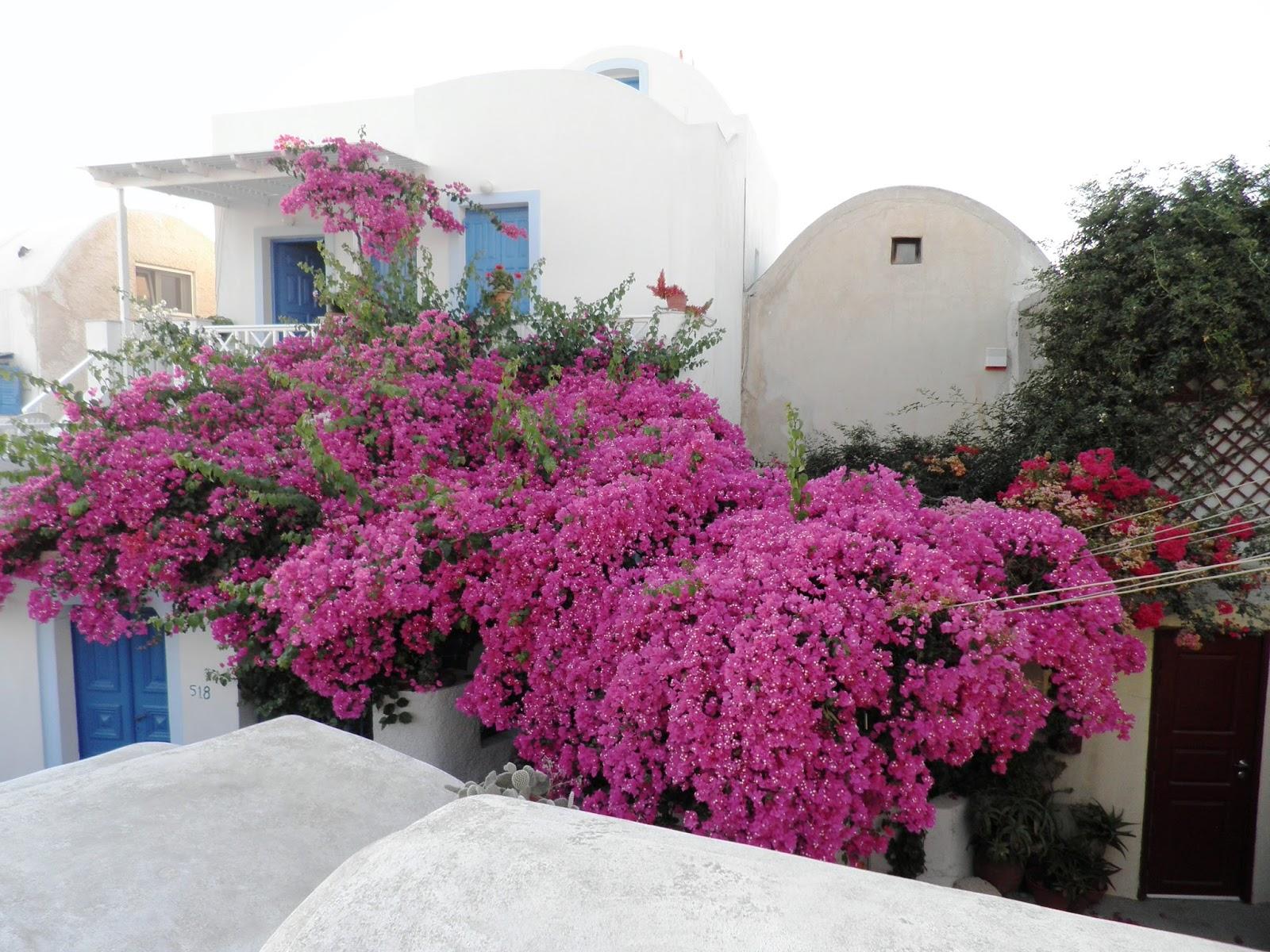 Bonsai de javier neila un bons i de buganvilla - Jardineras para balcones ...