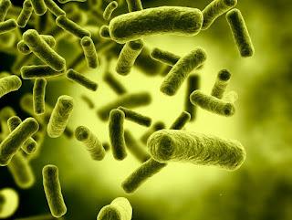 Bakteri Escherichia coli Penyebab BAB