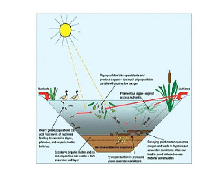 Standard Note: Ecosystem
