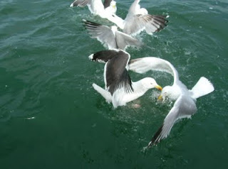 seagulls