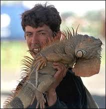Iguanas pictures