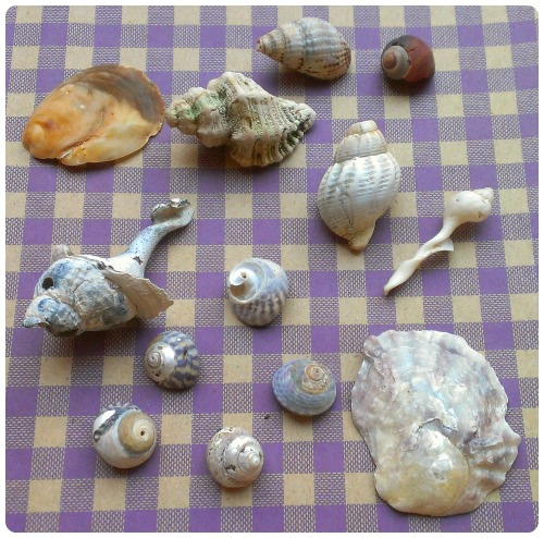 craftypainter: Shells