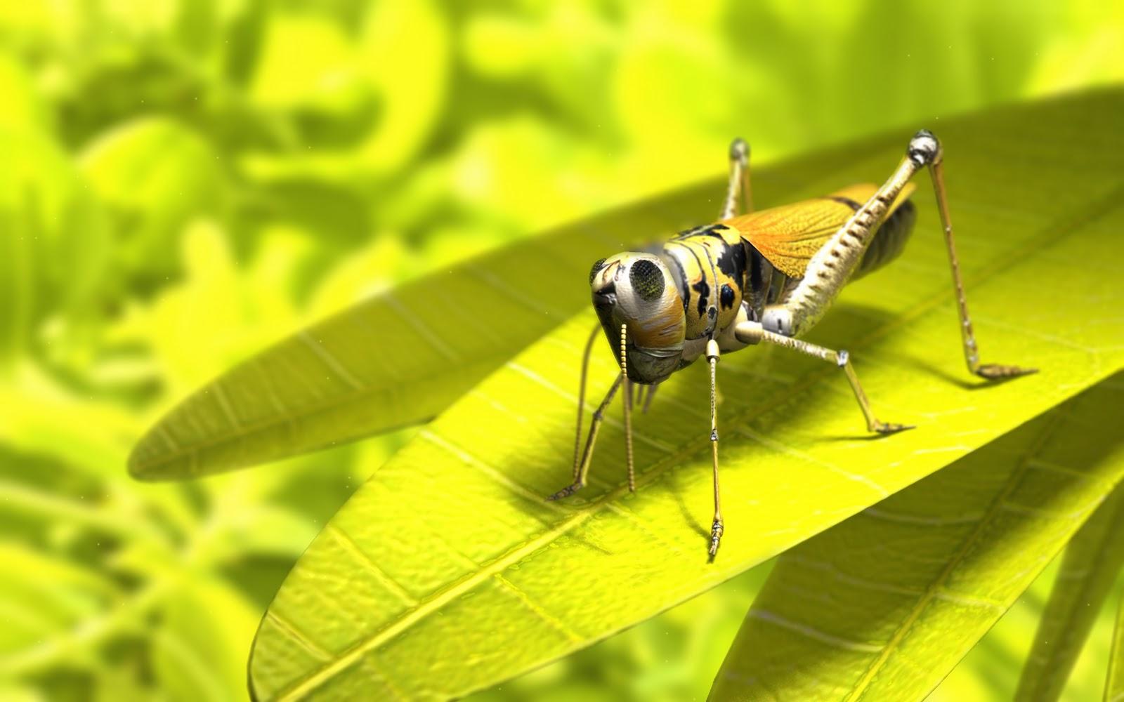 http://1.bp.blogspot.com/-6qu3HkiPc-4/TqwKMJoEvyI/AAAAAAAADm0/uv8Usnhk1EU/s1600/wallpaper_grasshopper.jpg