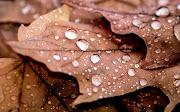 Imágenes de Fondo Hojas de Otoño con Gotas de Lluvia hojas de otono con gotas de lluvia fondos de pantalla otono