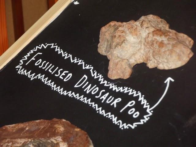 Fossilised dinosaur poo
