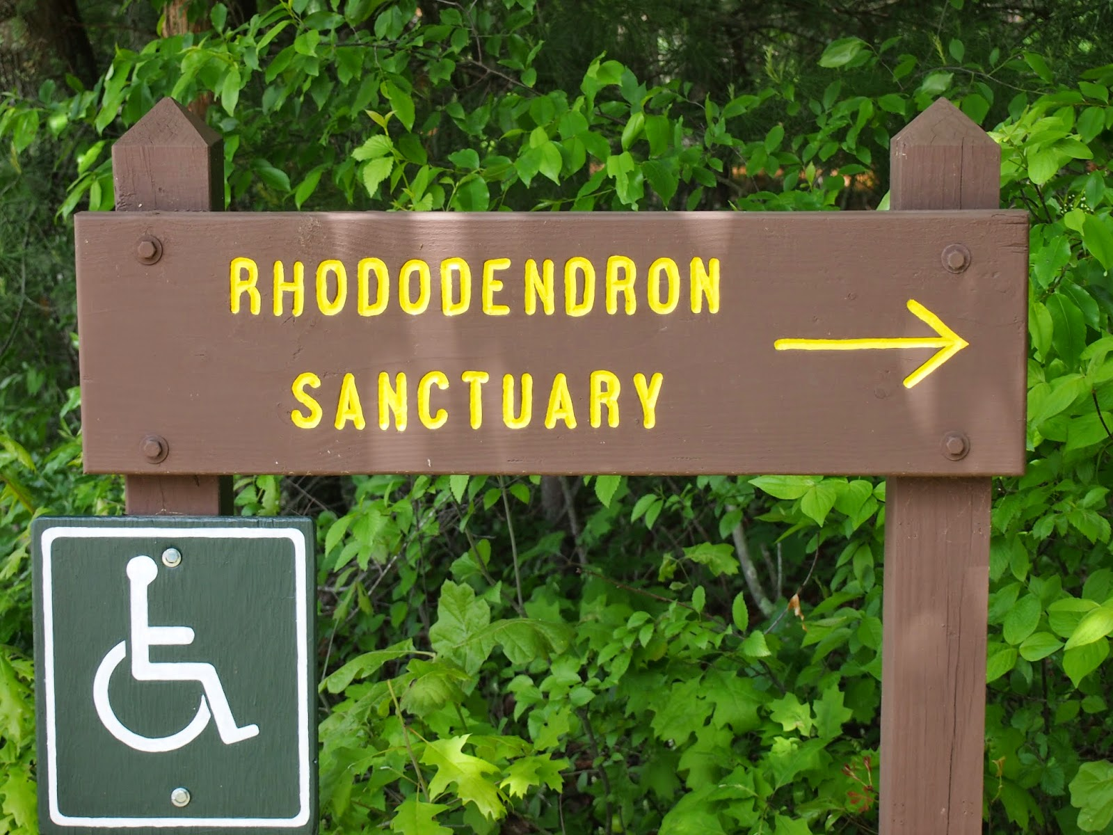 Hopewille Pond State Park and Rhododendron Sanctuary