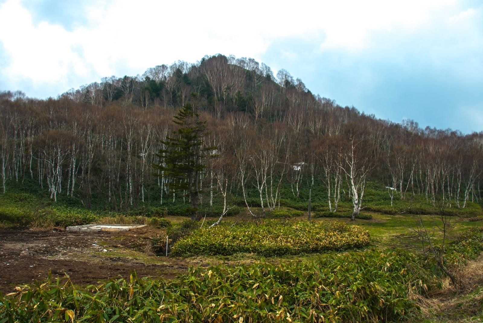 群生した枯れ木