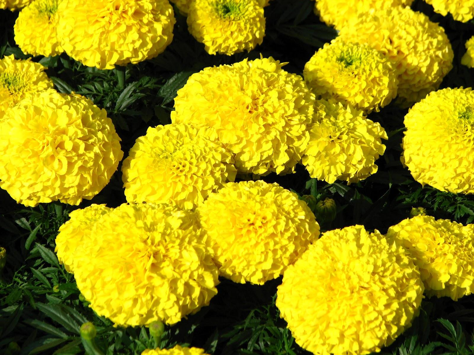 Viveiro Recanto Das Flores Flores Primavera Verão