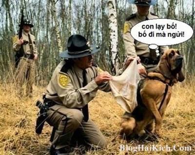 Chú chó hài hước nhất