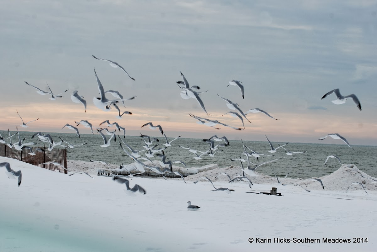 seagulls in flight over snowy beach