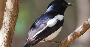 Image Result For Cara Merawat Love Bird Ganti Bulu