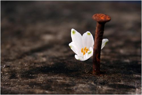 Poesia - Perdonare -