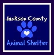 Jackson County Animal Shelter Cats