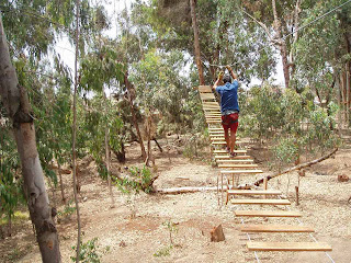 Poder noticias de chimbote el verdadero parque for Viveros forestales en colombia