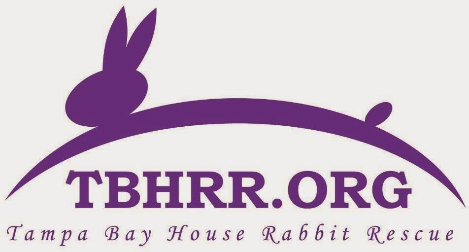 Tampa Bay House Rabbit Rescue