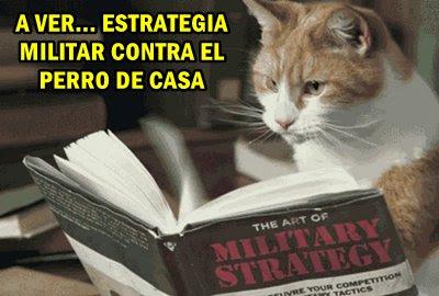 estrategia-gato-contra-perro