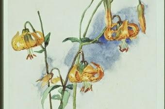 Sophie Pemberton Yellow Tiger Lilies