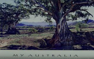 MY AUSTRALIA TREES