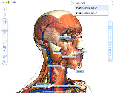 Google\'s 3D Body Browser - ForgeFX Training SimulationsForgeFX ...