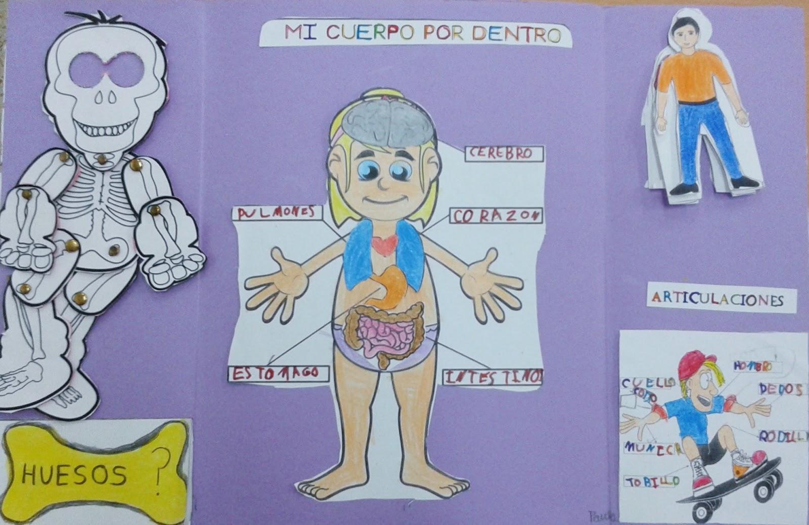 El blog de la maestra Berta: LAPBOOK EL CUERPO HUMANO.