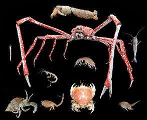 Tabla de calorías-moluscos y crustáceos