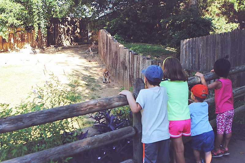 Explore Tulsa Zoo