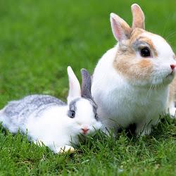 gambar hewan kelinci - gambar kelinci