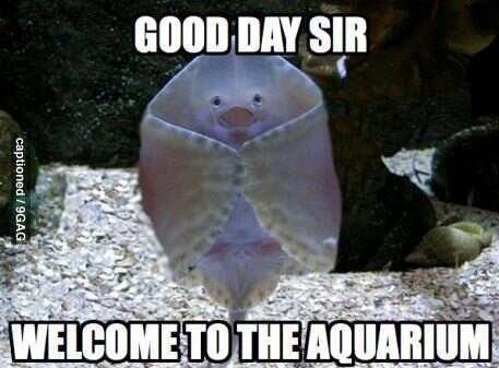 Jelly fish: