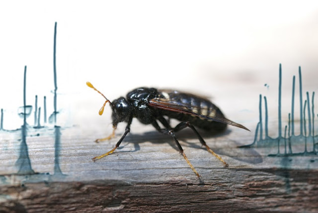Voici un survol d'une série portant sur les insectes que j'ai débuté l'été passé et sur laquelle je reviens à l'occasion. Pour la plupart des photos, l'insecte est mort et se prête bien à ma petite mise en scène! Pour d'autres comme ci-dessus il est bien vivant.