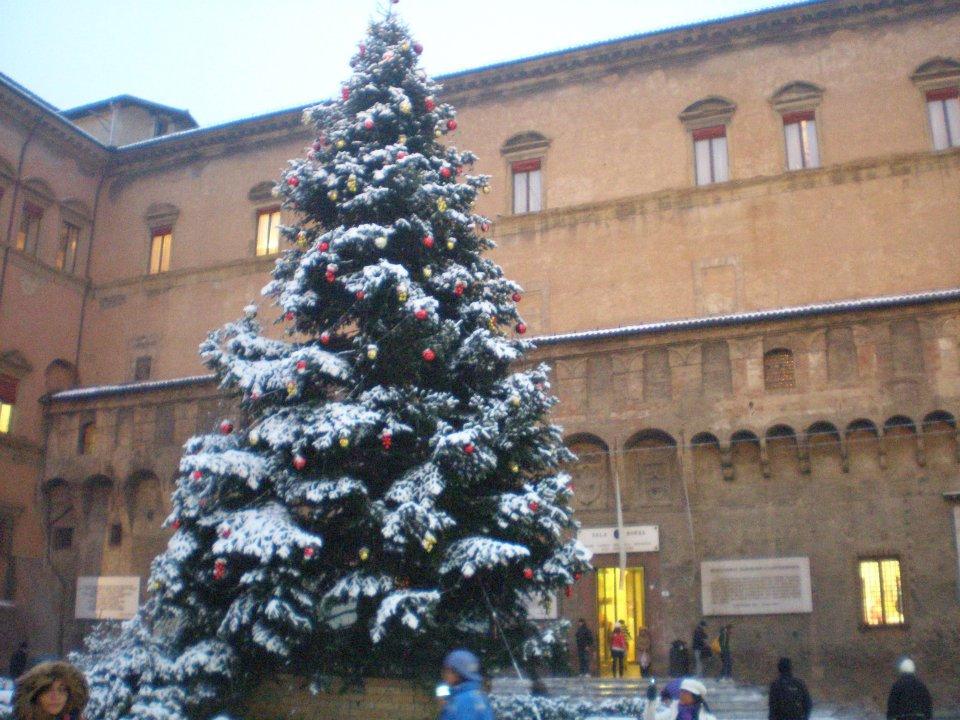 Albero di natale piazza maggiore bologna