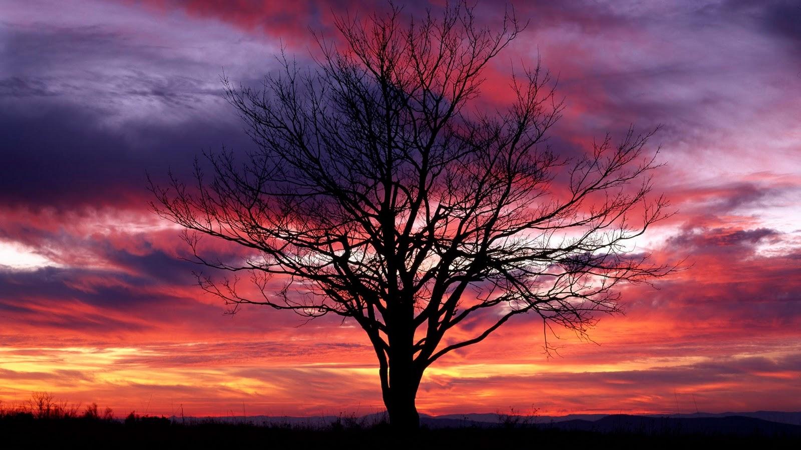 Best Desktop HD Wallpaper - Sunset Wallpapers