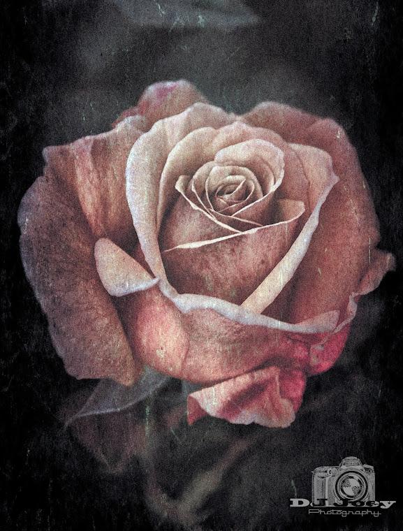 Voodoo Rose