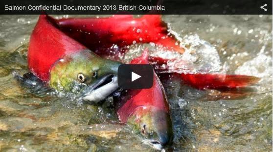 salmon virus discussion