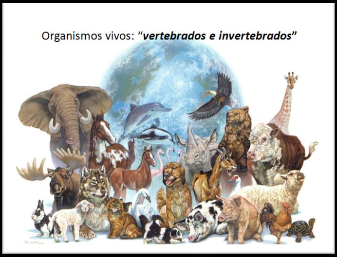 Organismos vivos: vertebrados e invertebrados