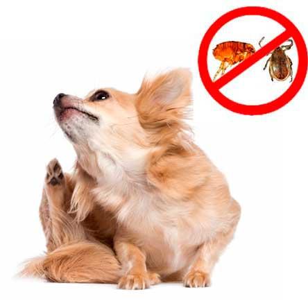 La farmacia en tu casa tu parafarmacia de confianza 05 - Acabar con las pulgas en casa ...