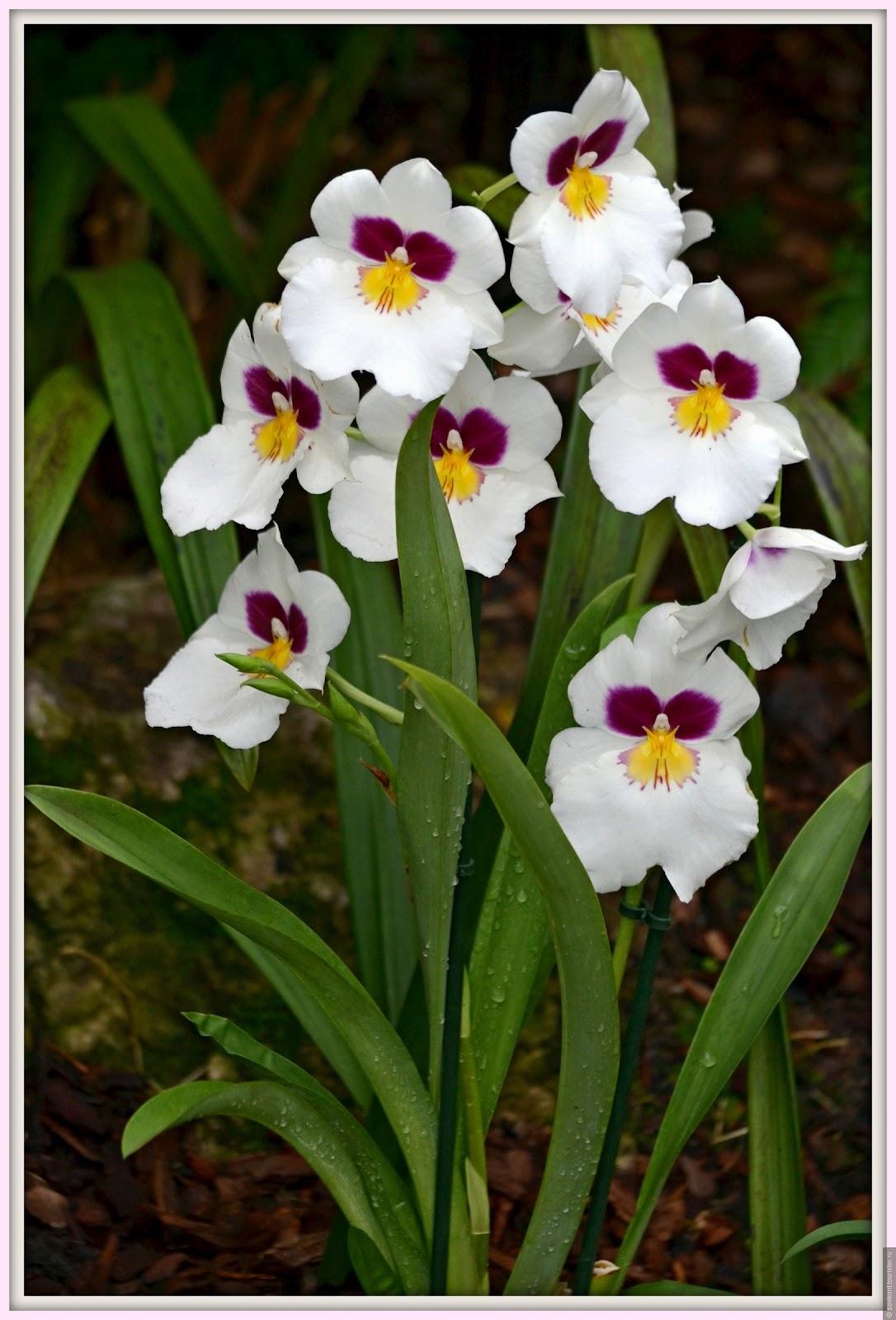 Цветы из бумажных салфеток пошаговое фото