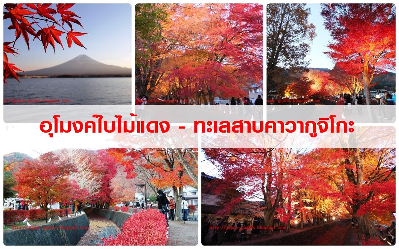 รวมรีวิวที่เที่ยวใบไม้แดงญี่ปุ่น